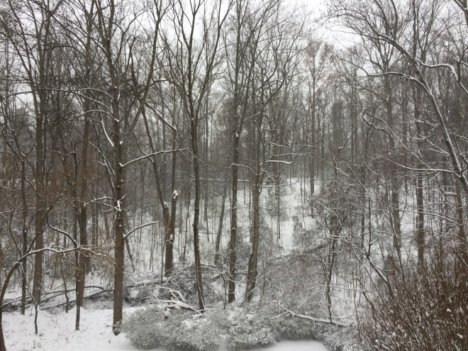 wooded hillside in snow