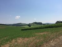 Rolling farmland in the Shenandoah Valley in summer
